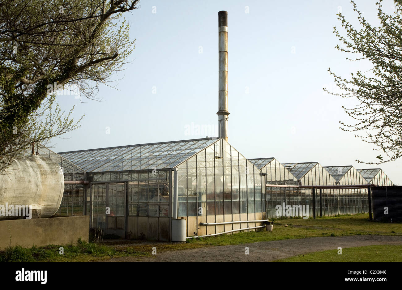Glasshouses chimney plant nursery Vale Guernsey, Channel islands - Stock Image
