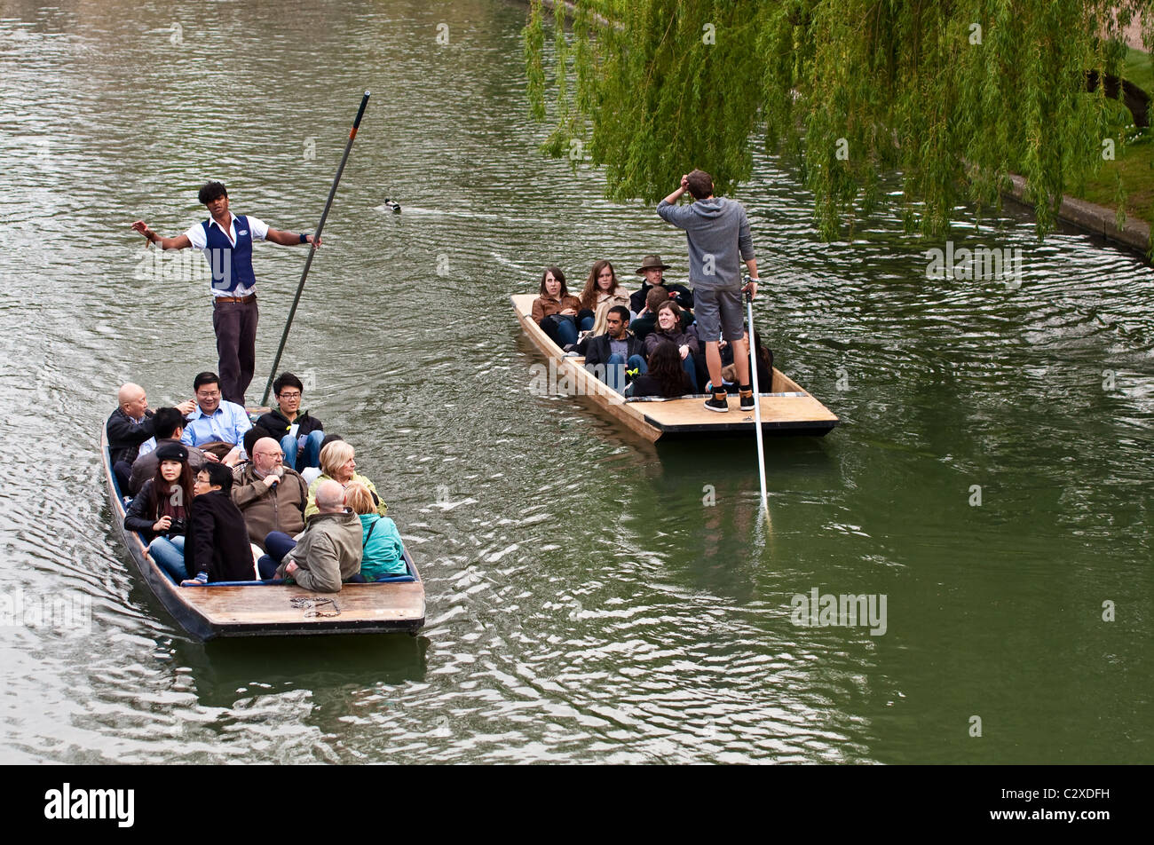 Punting on the River Cam - Stock Image