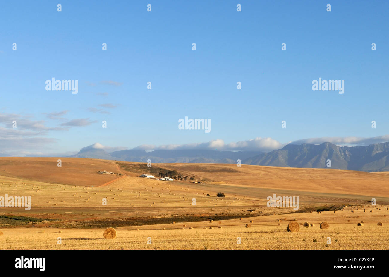 Farmstead in rolling hills, Riviersonderend Mountains as back drop, Western Cape, South Africa - Stock Image