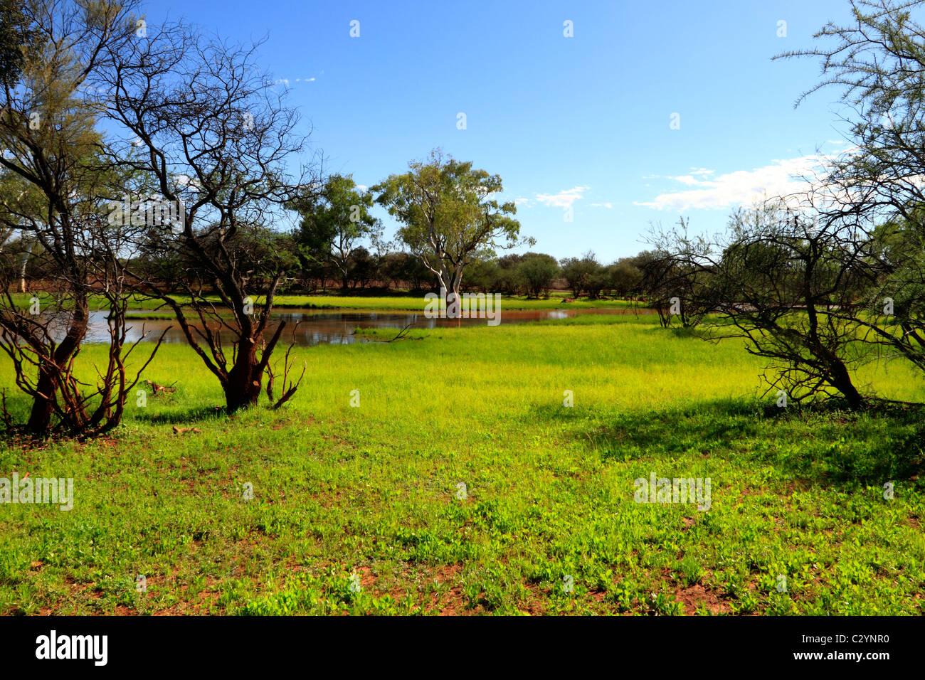 Eucalyptus tree landscape and water puddles, Pilbara Northwest Australia - Stock Image