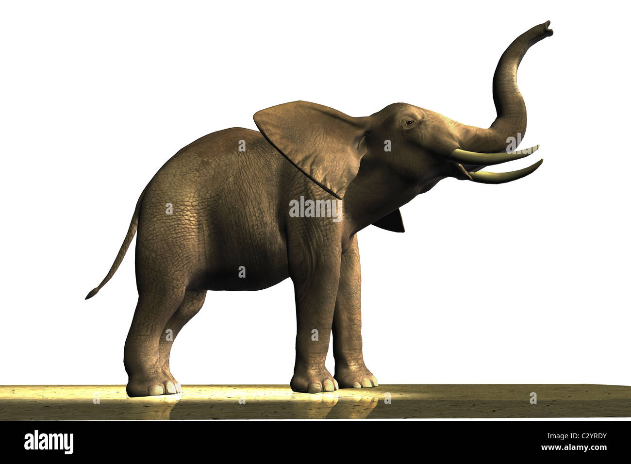 Male African elephant with ivory tusks. Stock Photo