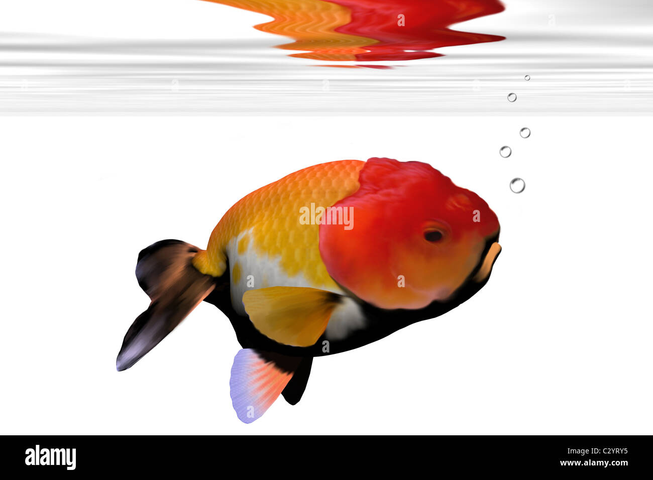 Goldfish Face Stock Photos & Goldfish Face Stock Images - Alamy