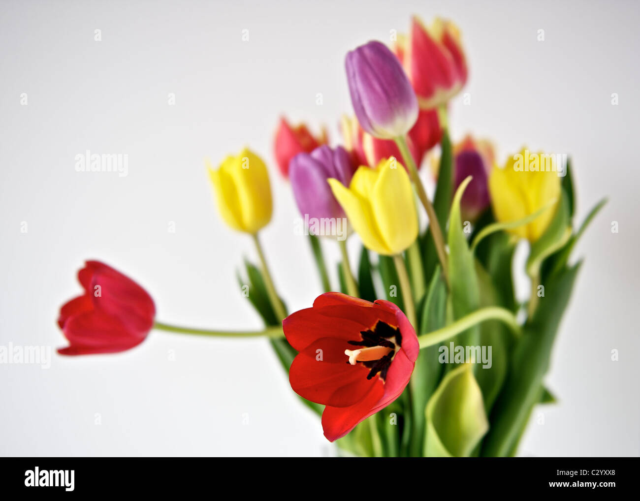 A bunch of colourful tulips. Stock Photo