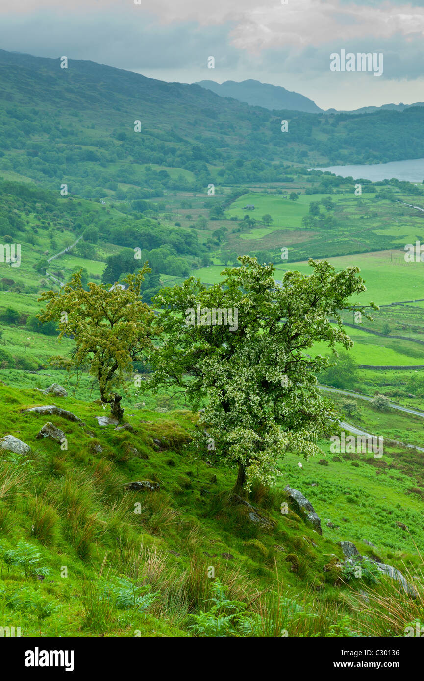 Welsh landscape in Snowdonia National Park at Lake Llyn Gwynant, Gwynedd, Wales - Stock Image