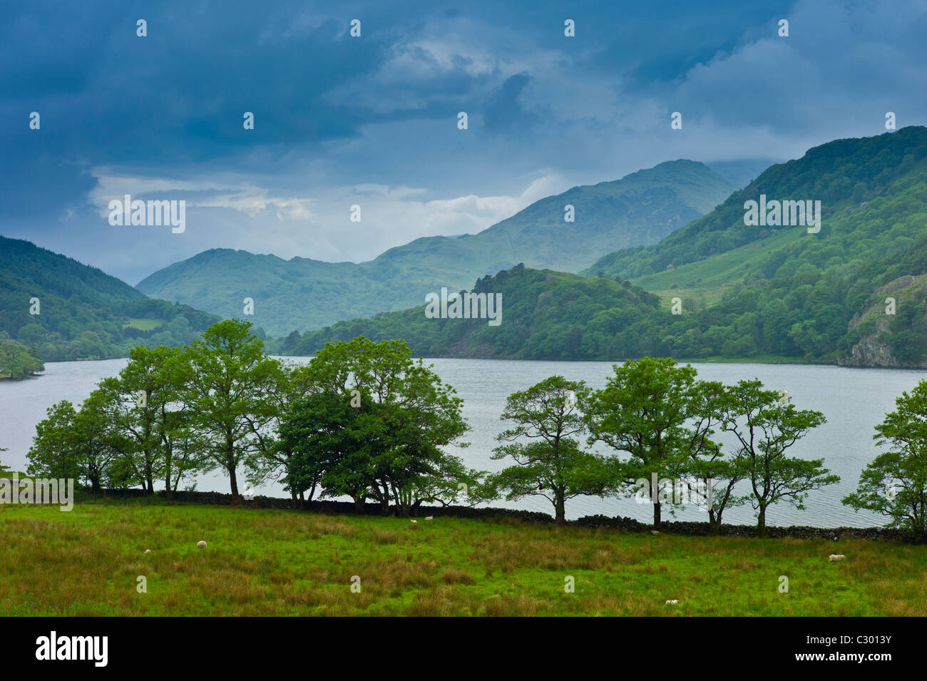 Hawthorn trees in Welsh landscape in Snowdonia National Park at Lake Llyn Gwynant, Gwynedd, Wales - Stock Image