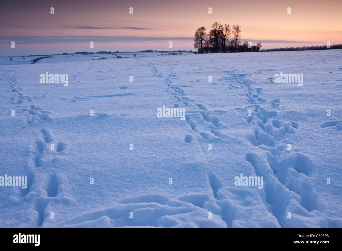 Animal tracks across the field in traditional snow scene in The Cotswolds, Swinbrook, Oxfordshire, United Kingdom - Stock Image