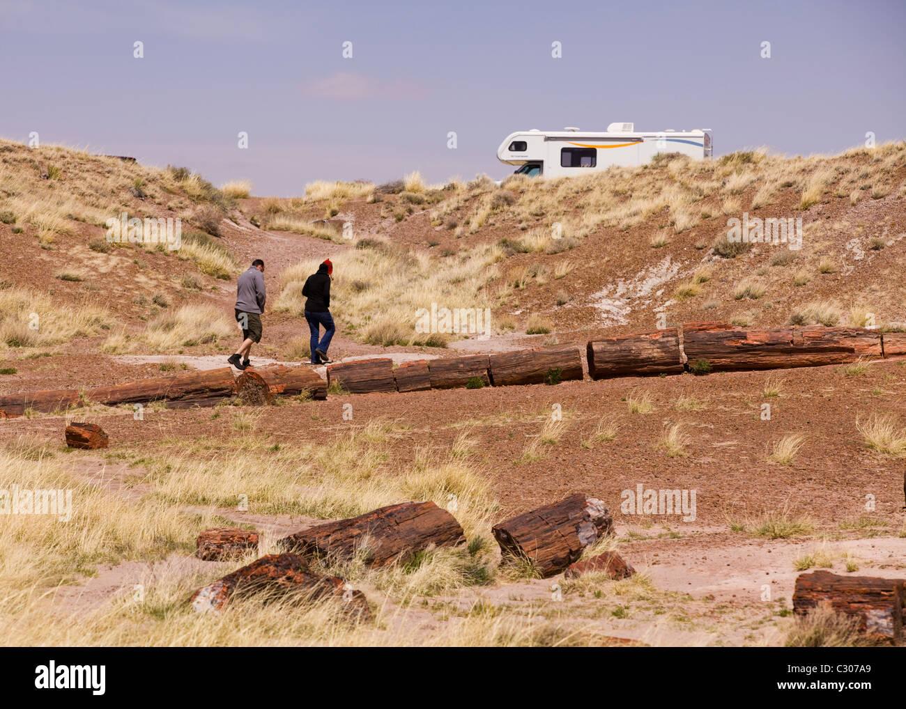 Petrified wood in desert landscape - Arizona USA - Stock Image