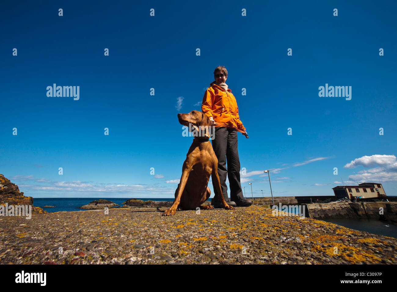 A woman pauses while walking her dog on the harbour wall at St. Abbs, Berwickshire. - Stock Image