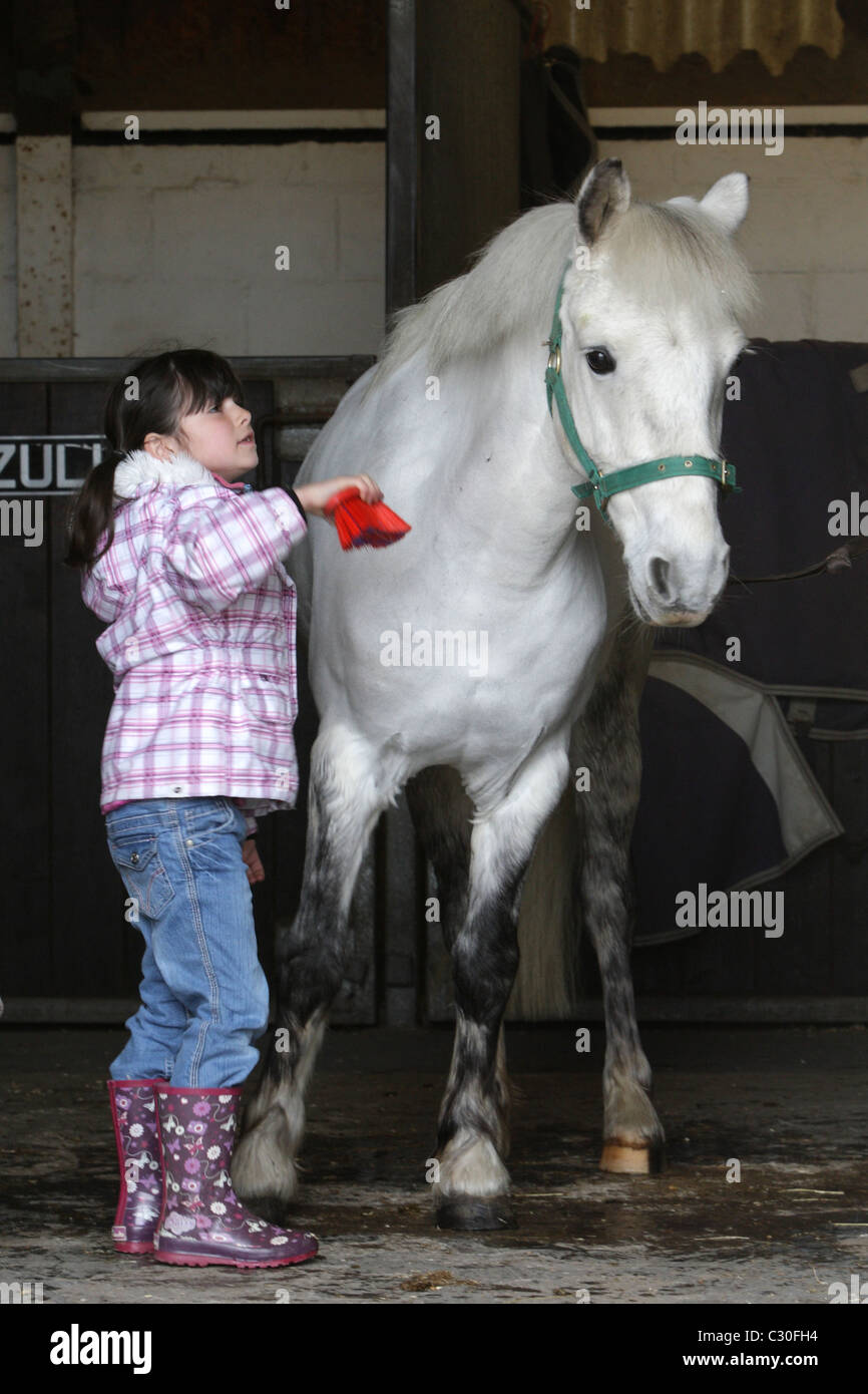 Pony grooming at Malzard Riding Stables Jersey Channel Islands - Stock Image