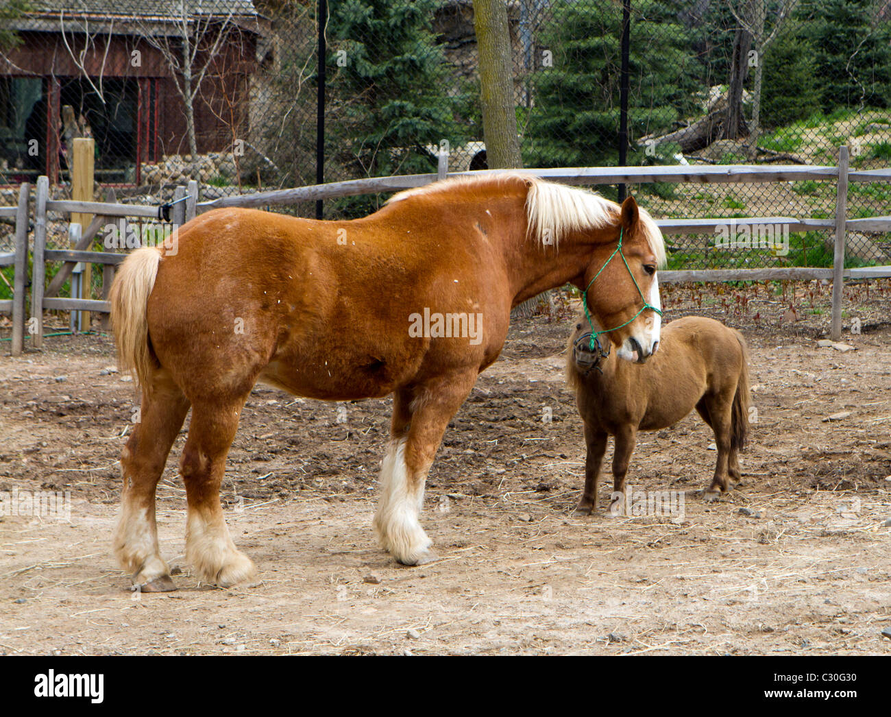 A large horse and a small pony in a coral pen Stock Photo