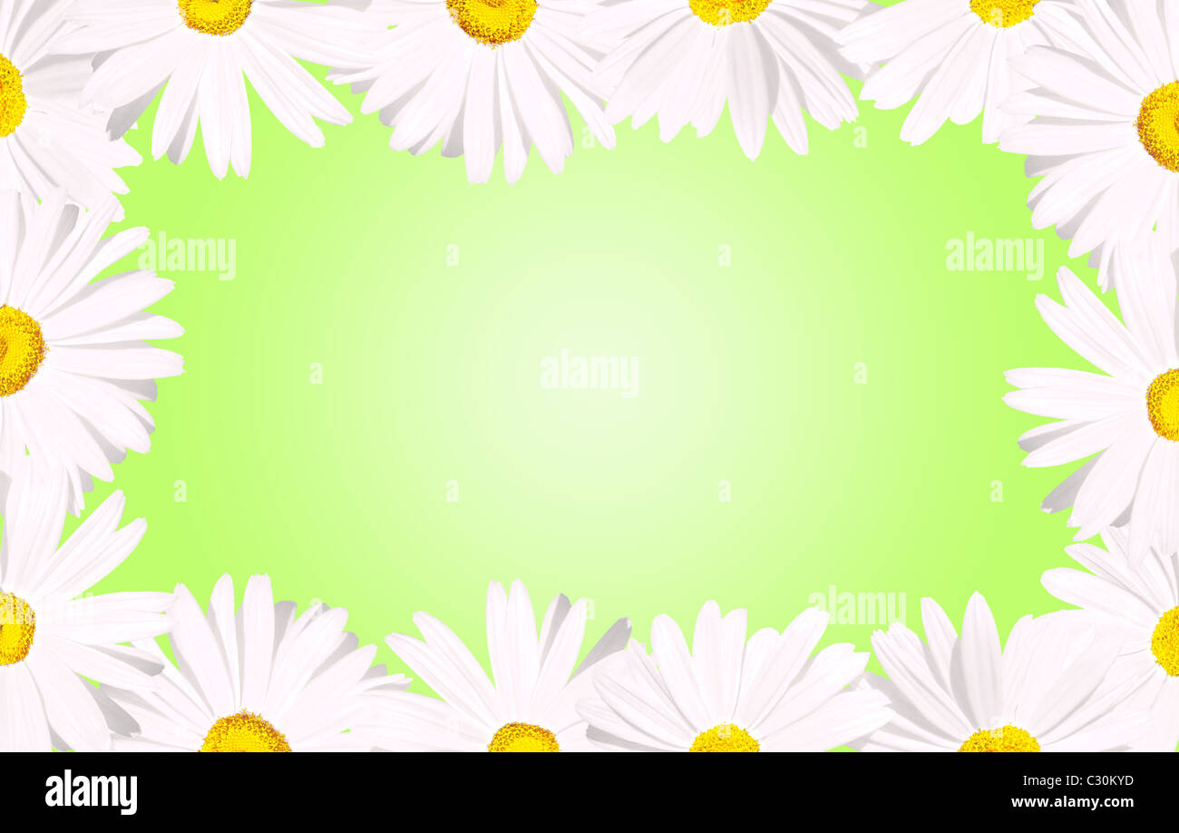 Its spring white daisy flowers forming a border over a spring baby its spring white daisy flowers forming a border over a spring baby green background izmirmasajfo