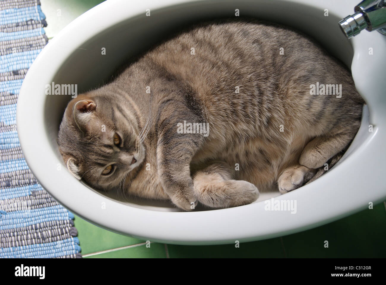Bidet Funny High Resolution Stock Photography And Images Alamy
