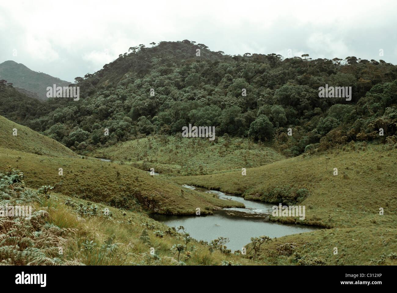 Leg of Mutton [lamb], Sri Lanka, Horton Plains, Creek shaped like a leg of a lamb - Stock Image