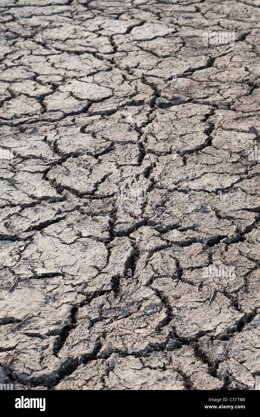 Cracked, parched soil - Stock Image