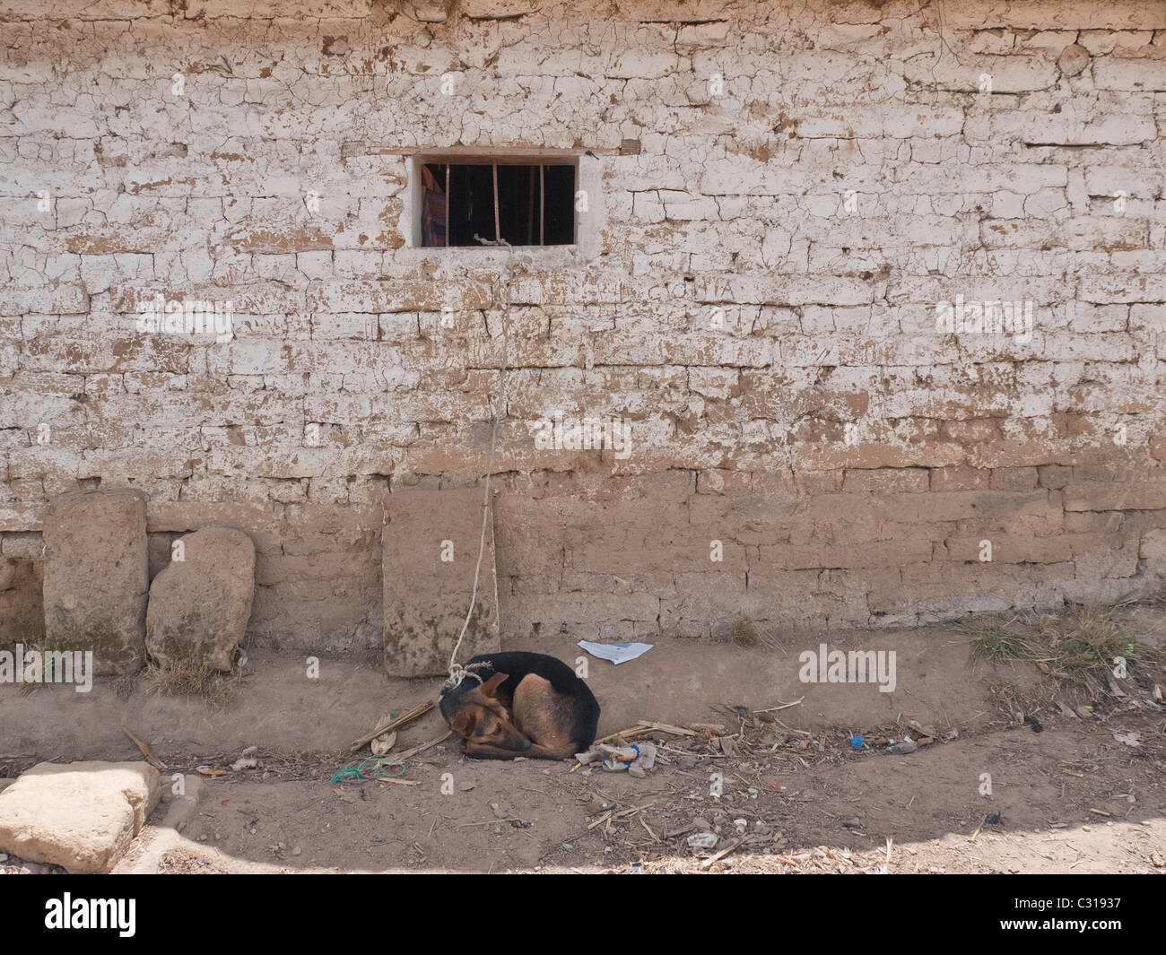 The pet dog of a family sleeps on the ground in front of an adobe house while being tied up in Totonicapan, Guatemala. - Stock Image