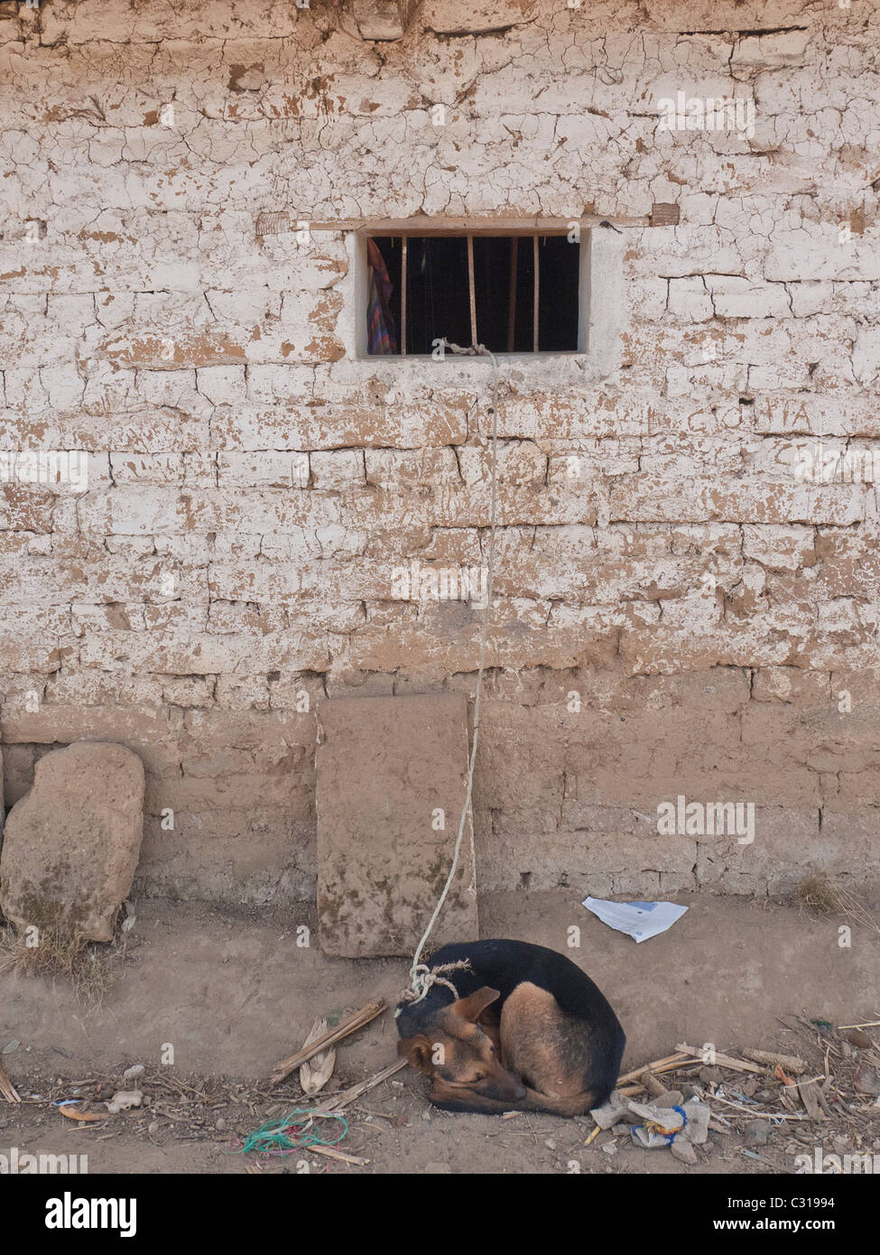 Dog sleeping in beside adobe house in Totonicapan, Guatemala. - Stock Image