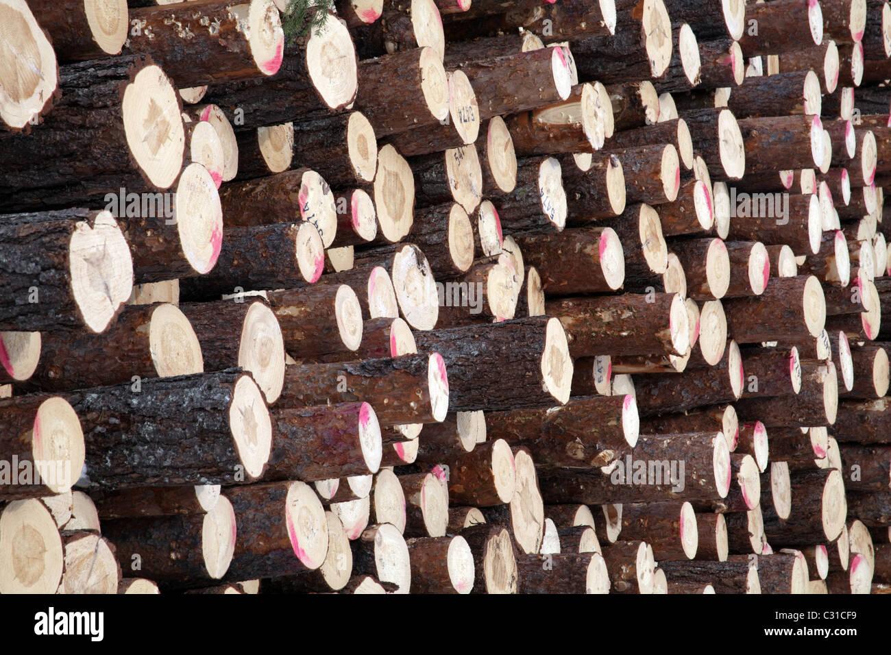 Large stack of pine tree trunks ready for transportation, Arvidsjaur, Northern Sweden - Stock Image
