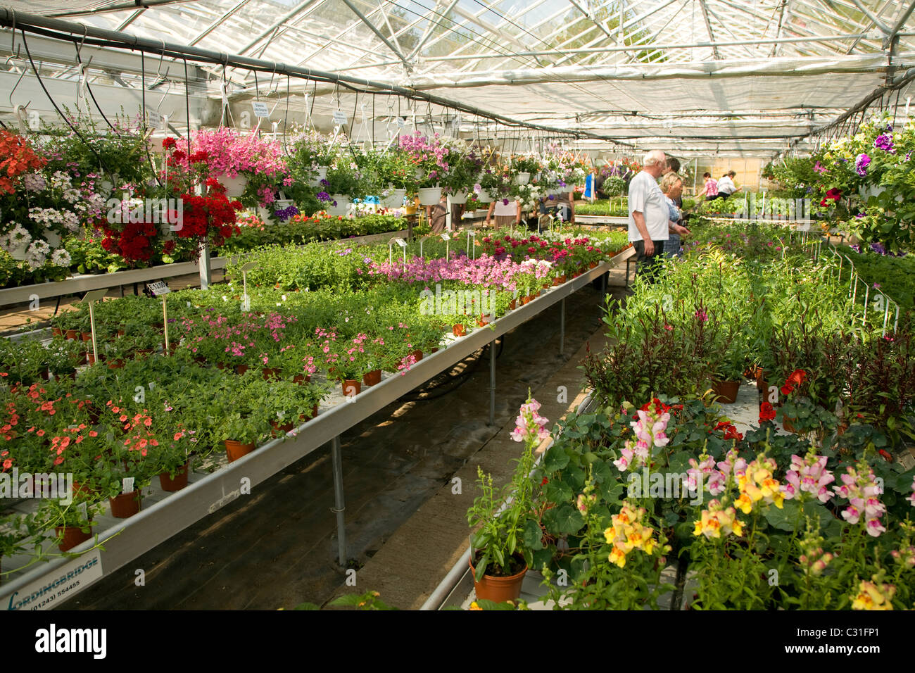 Customers plants for sale inside nursery greenhouse - Stock Image