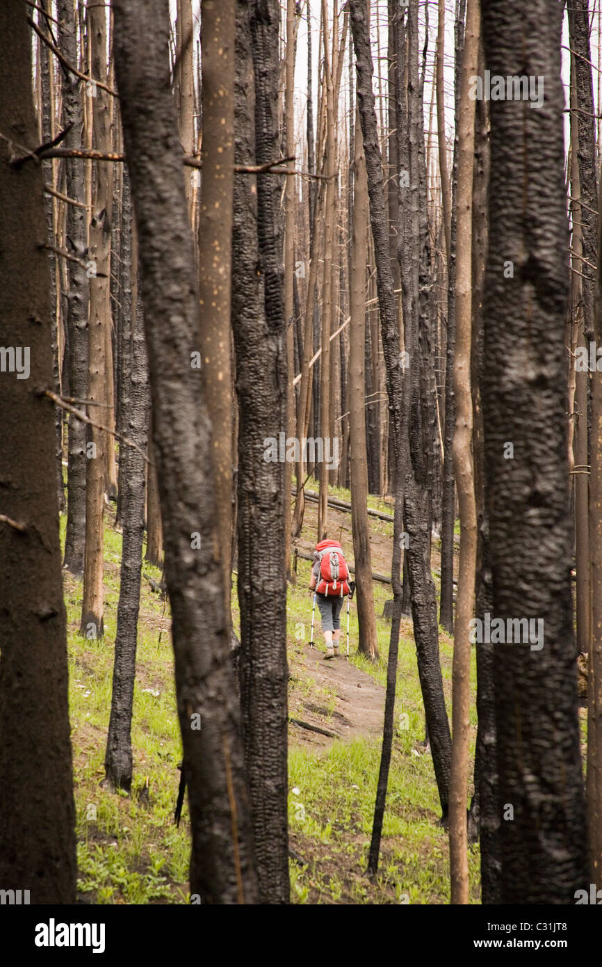 One female backpacker hikes through a landscape scarred by a recent forest fire. Stock Photo