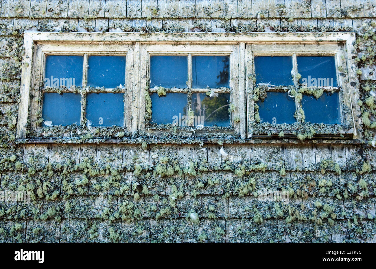 A set of windows layered by the elements in Acadia National Park, Maine. - Stock Image