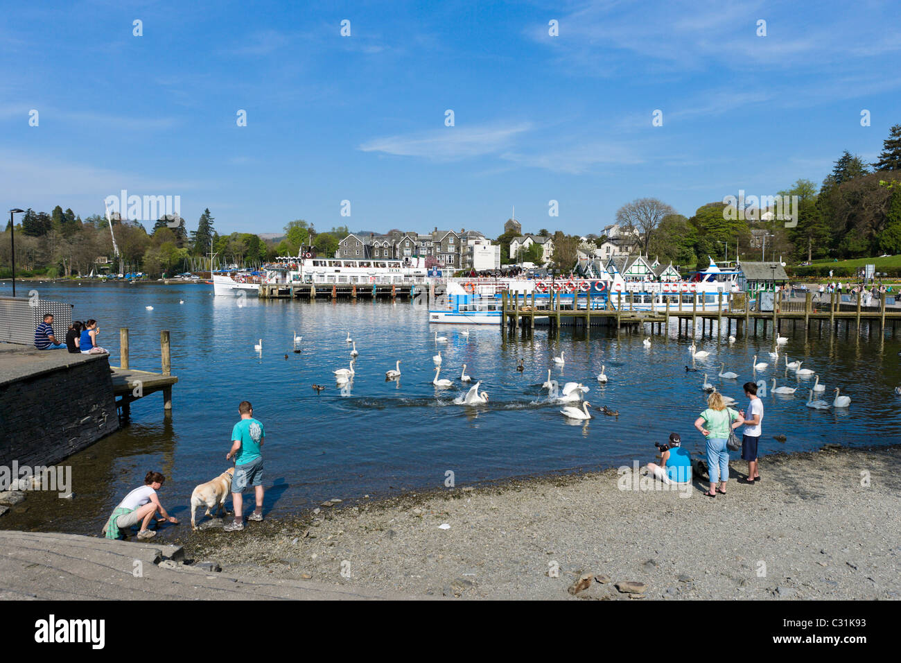 Tourists feeding the swans in Bowness, Lake Windermere, Lake District National Park, Cumbria, UK - Stock Image
