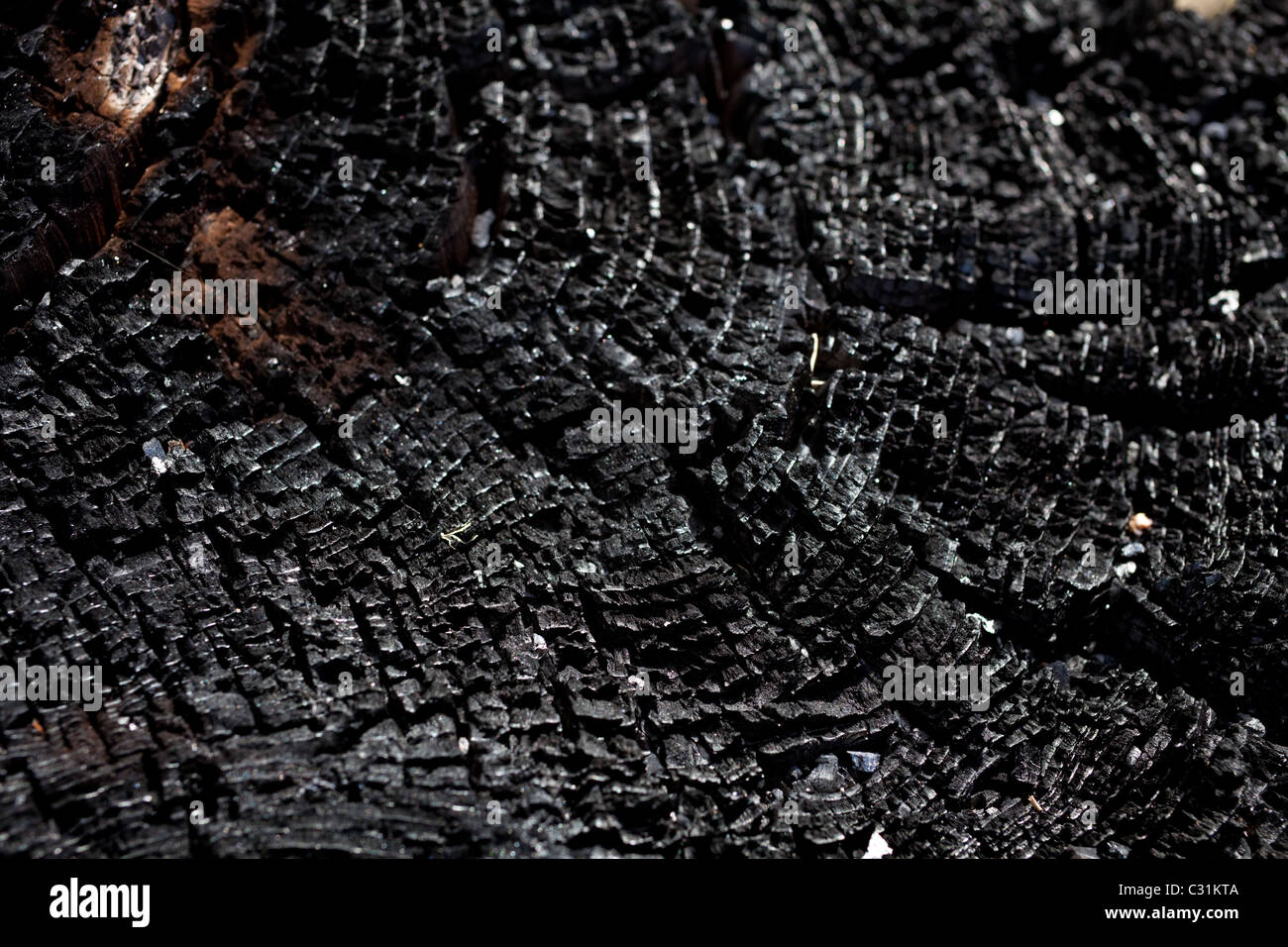 Burnt Wood texture for backrgound - Stock Image