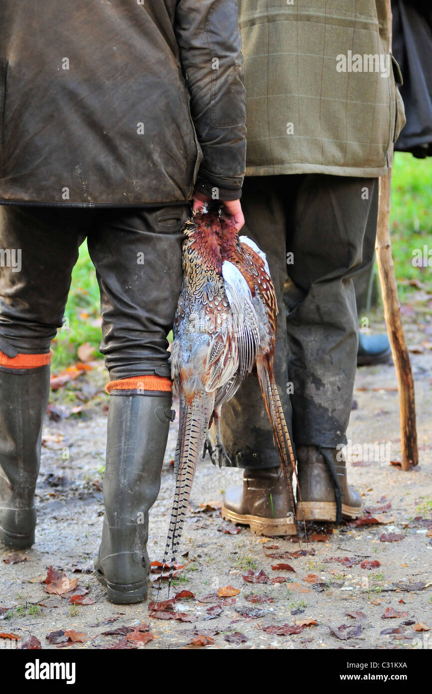 HUNTERS BRINGING BACK COMMON PHEASANTS, HUNTING IN A PRIVATE FOREST NEAR THE MARQUENTERRE PARK, SOMME (80), FRANCE Stock Photo