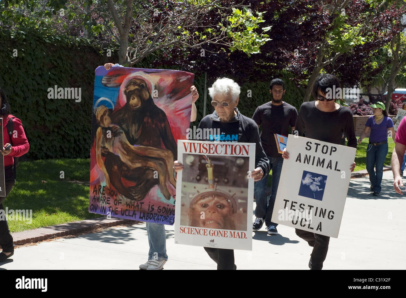 Animal Rights Protesters of Various Ages Carrying Anti-Vivisection Signs at UCLA in Los Angeles, CA - Stock Image