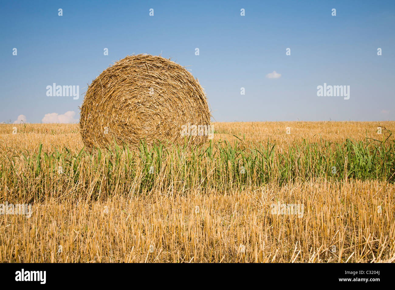 bale of the straw - harvest - Stock Image