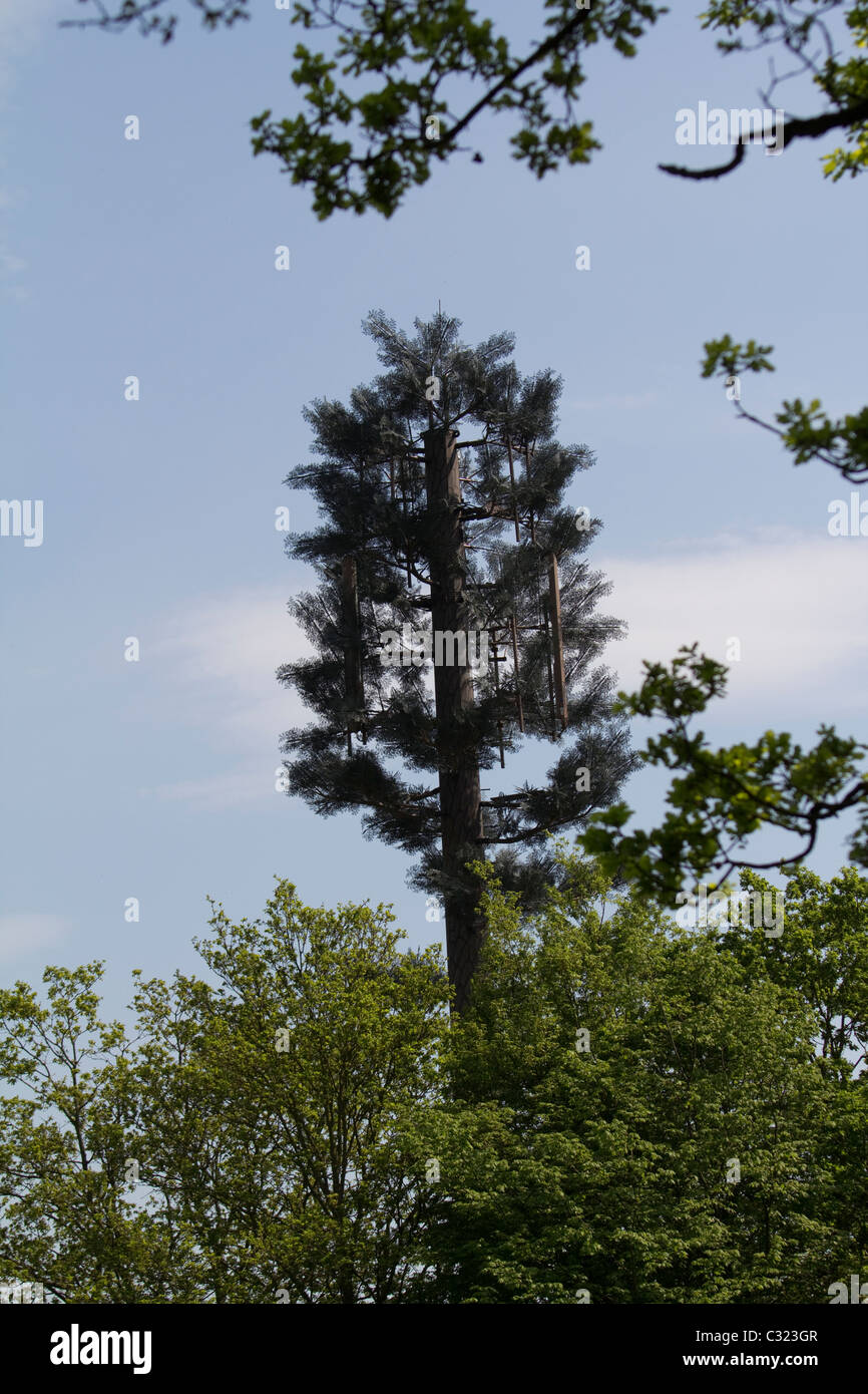 phone mast disguised as tree, Chingford London - Stock Image