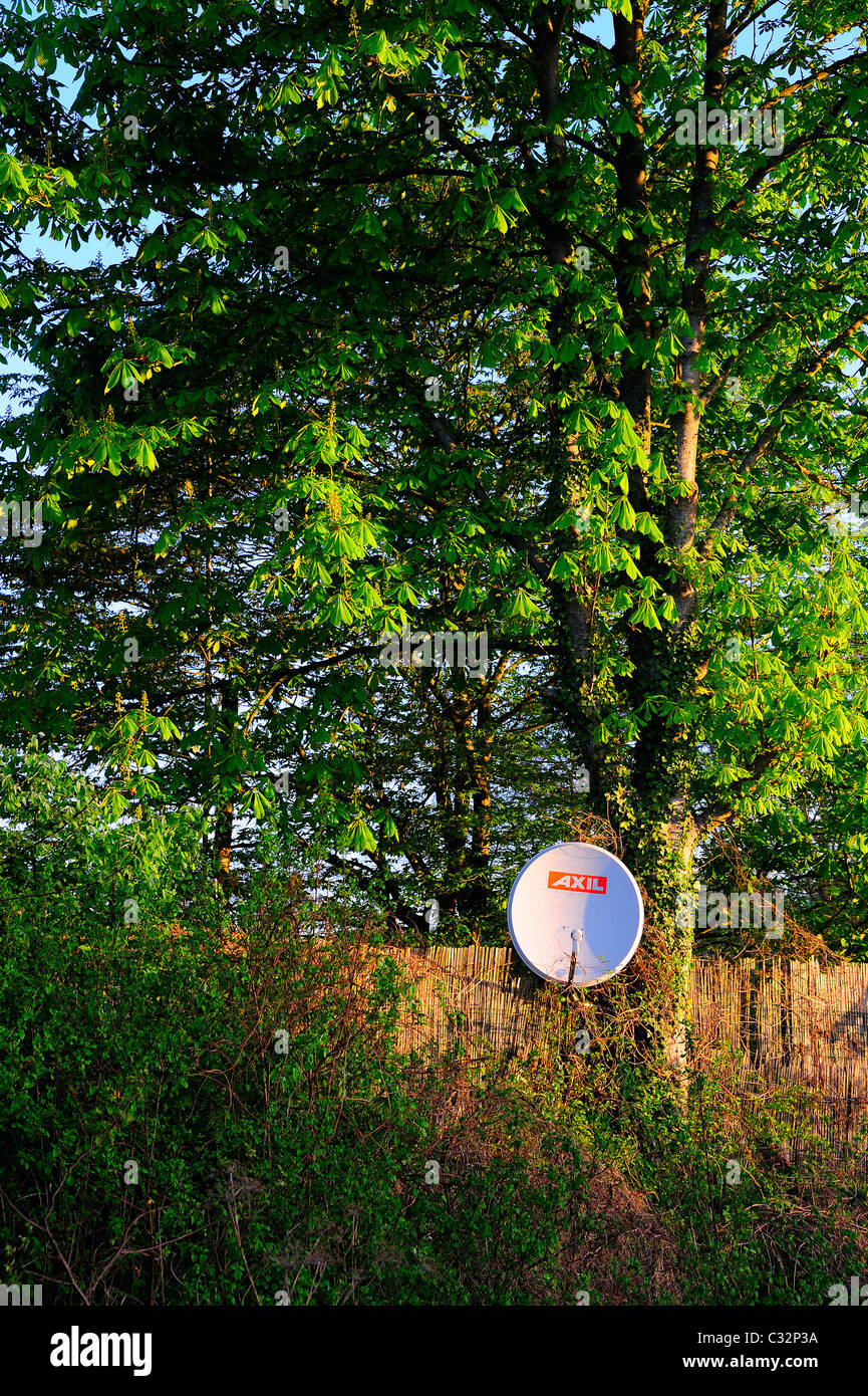 Satellite dish in a tree Stock Photo