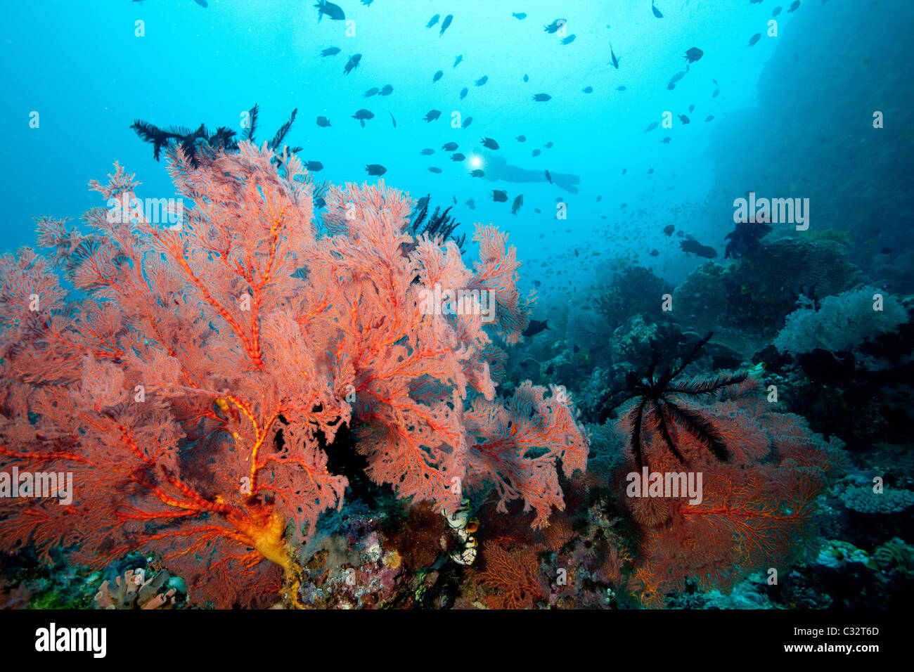 Thriving coral reef - Stock Image