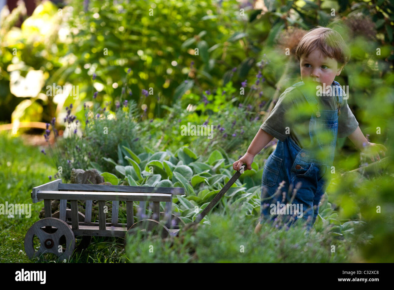 Two-year-old boy pulls wagon through garden. - Stock Image