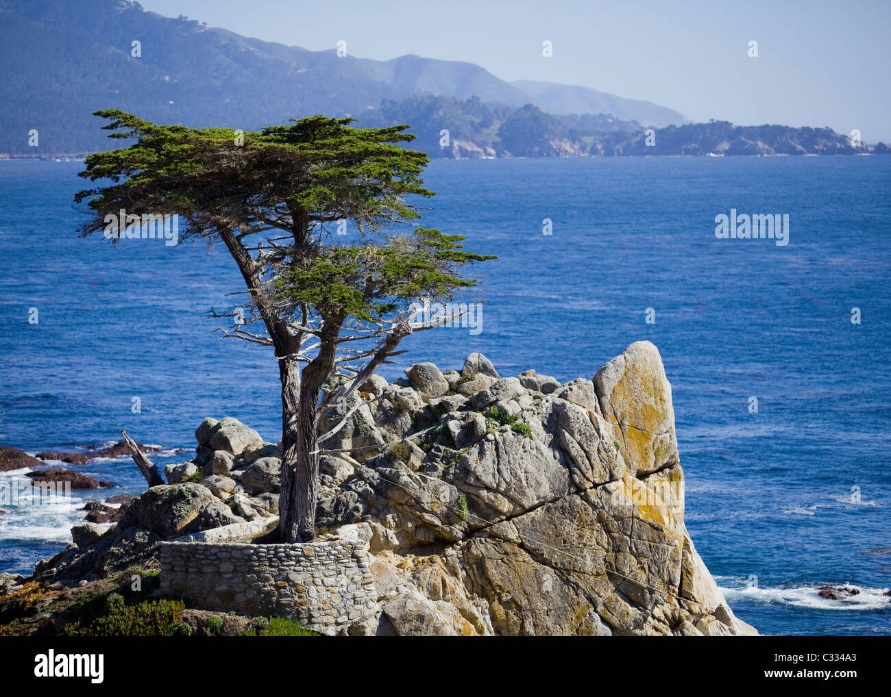 Lone Cypress tree in Monterey, California, USA - Stock Image