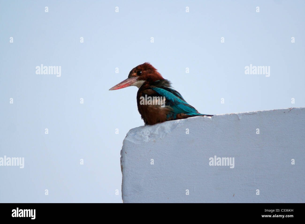 King on the wall - Stock Image
