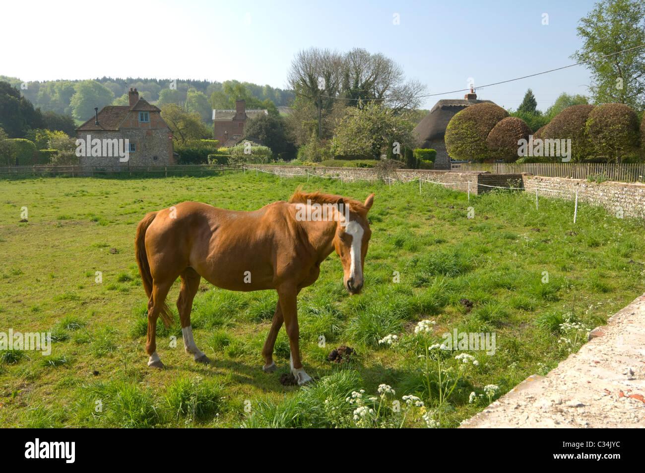 Horse Singleton West Sussex UK - Stock Image