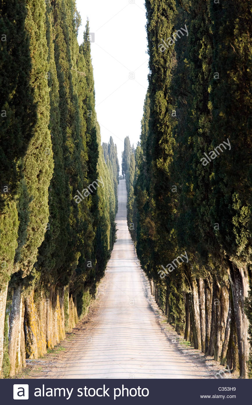 white road with cypresses,chianti,tuscany,italy Stock Photo