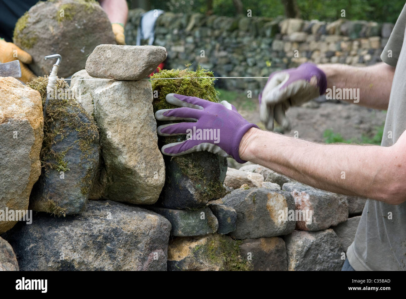 Adding the coping stones to a stint of rebuilt dry stone wall. - Stock Image