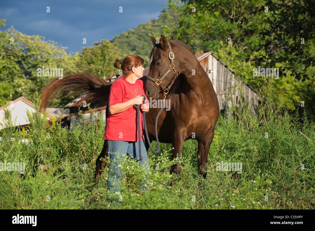 Woman looking at her Arabian horse eye to eye, image for love, confrontation or understanding, taken in summer evening - Stock Image