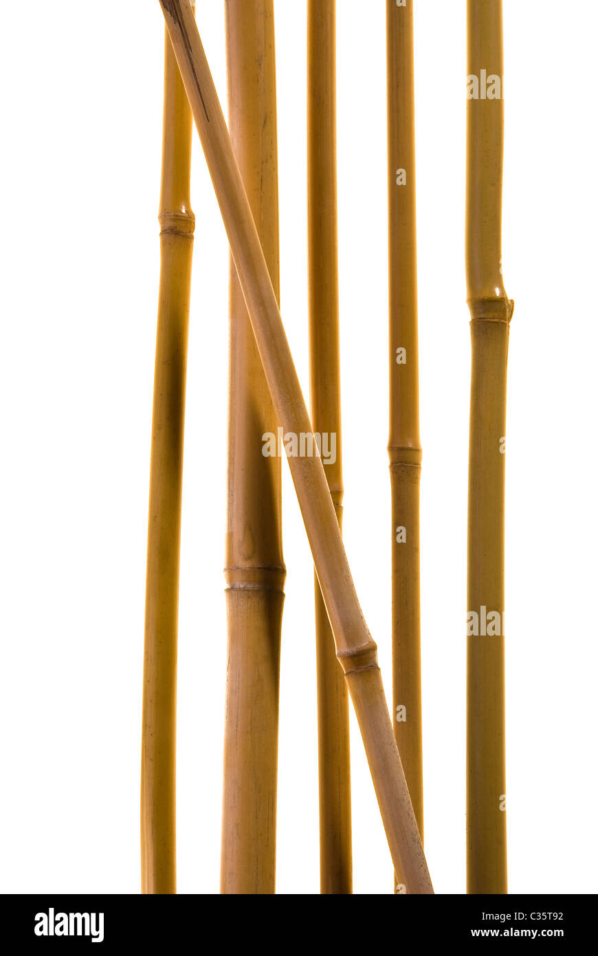 Bamboo canes - Stock Image