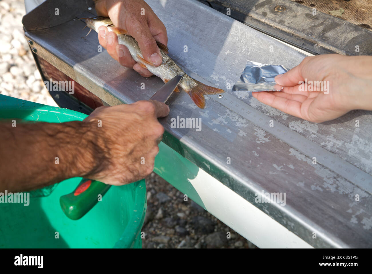 Sampling scales and genetic material  Agrario Institute of San Michele all'Adige, Trentino Alto Adige, Italy, - Stock Image