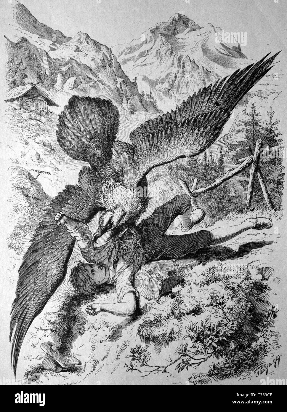 Vulture captures a boy, historical image 1886 - Stock Image