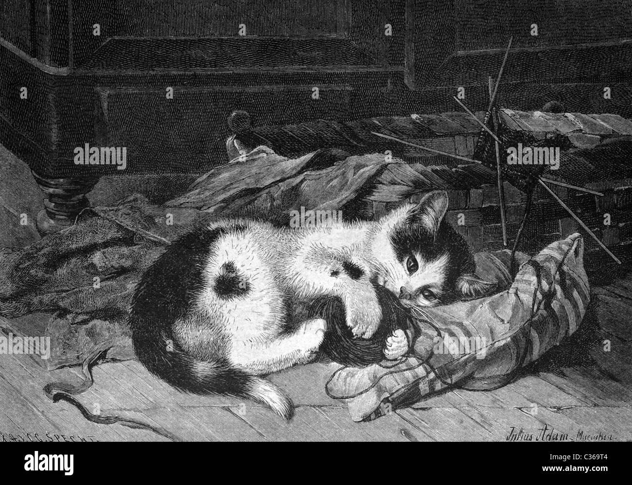 sleeping cat, historical image 1886 - Stock Image