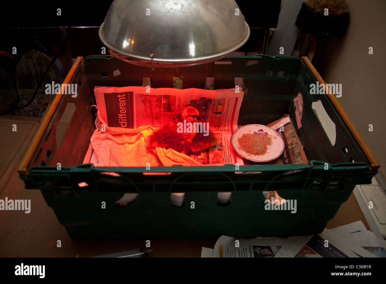 Heat Lamp Stock Photos Amp Heat Lamp Stock Images Alamy