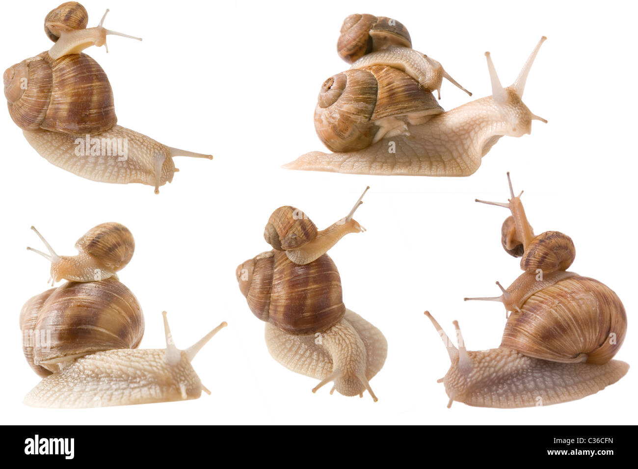 different point of view from piggy back snails - Stock Image