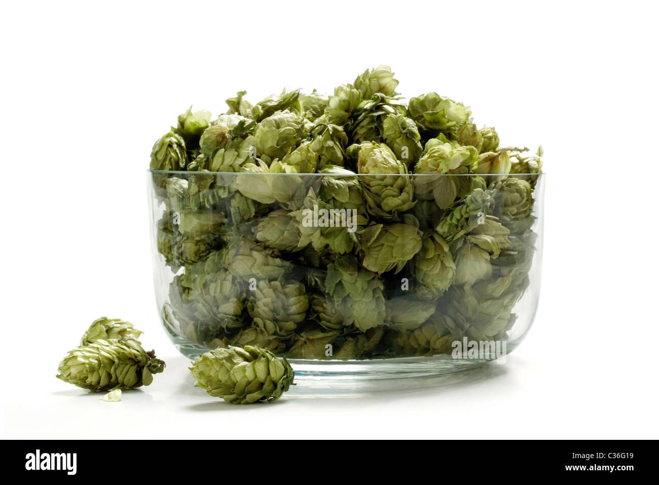 Hop - Stock Image