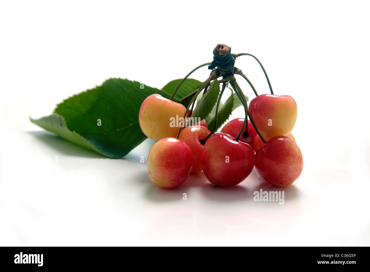 Cherry variety Porzellankirsche  with twig and leaves - Stock Image