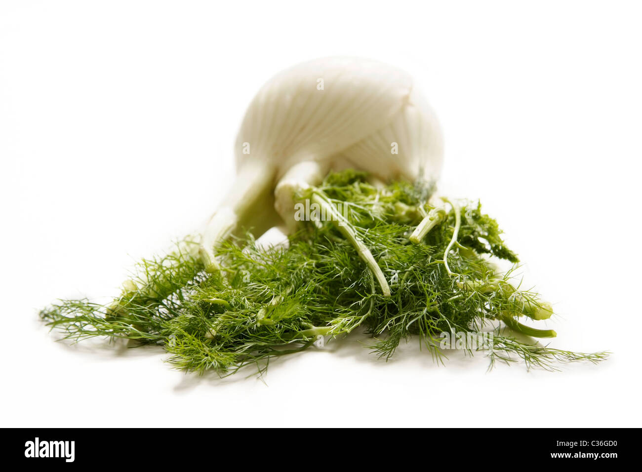 Fresh fennel bulb with green - Stock Image
