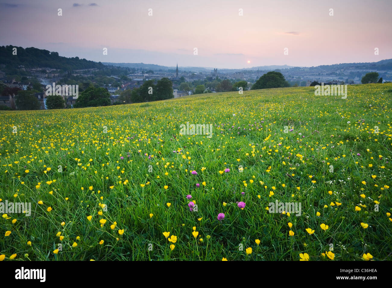 Wildflowers on Bathwick Hill in Spring with Bath in the Distance. Bath. Somerset. England. UK. - Stock Image