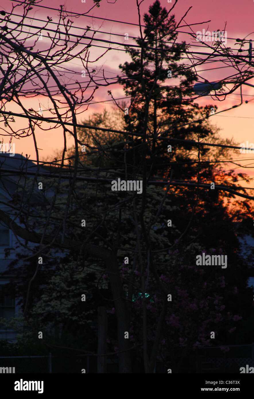 Suburban Spring Sunset - Stock Image